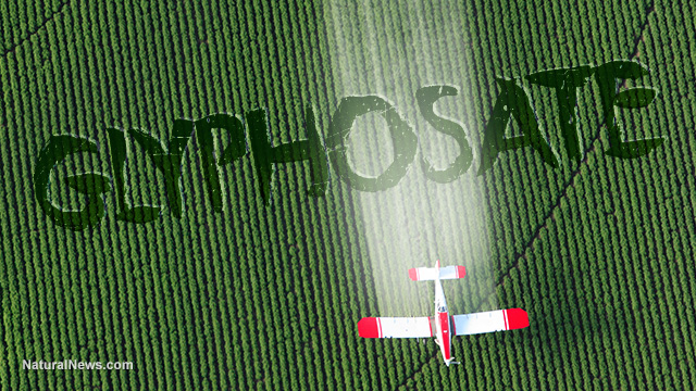 coincidence monsanto patented glyphosate as an antibiotic drug